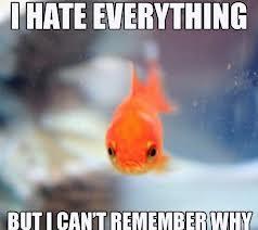 fish staring